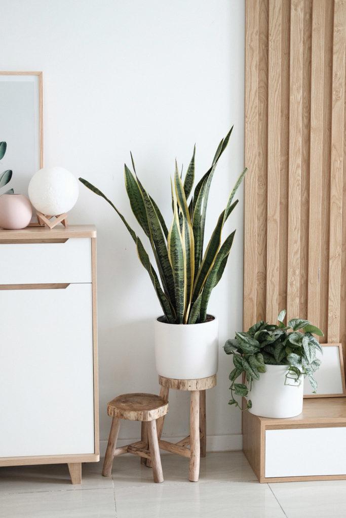 plants indoor vastu