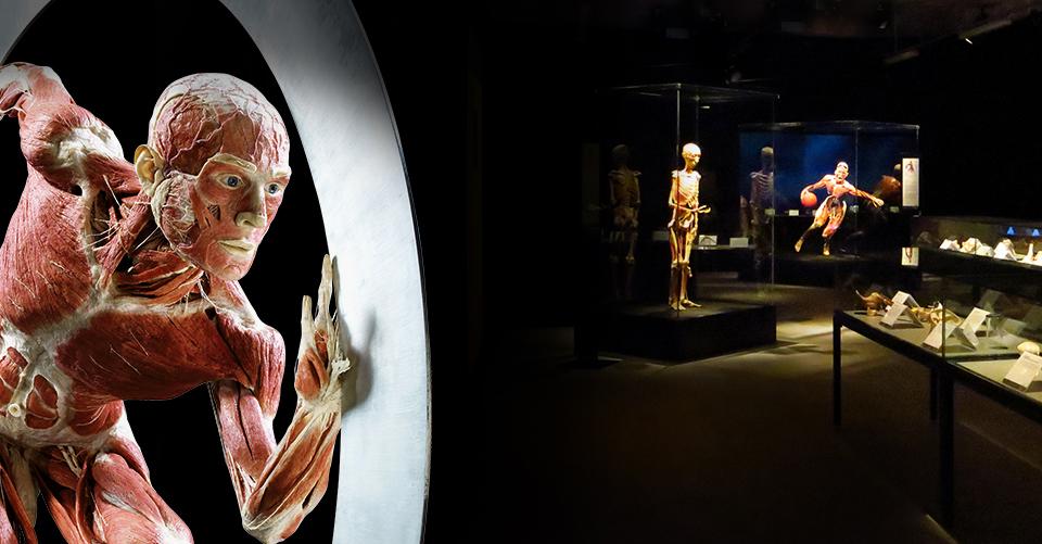 body world plastinarium museum