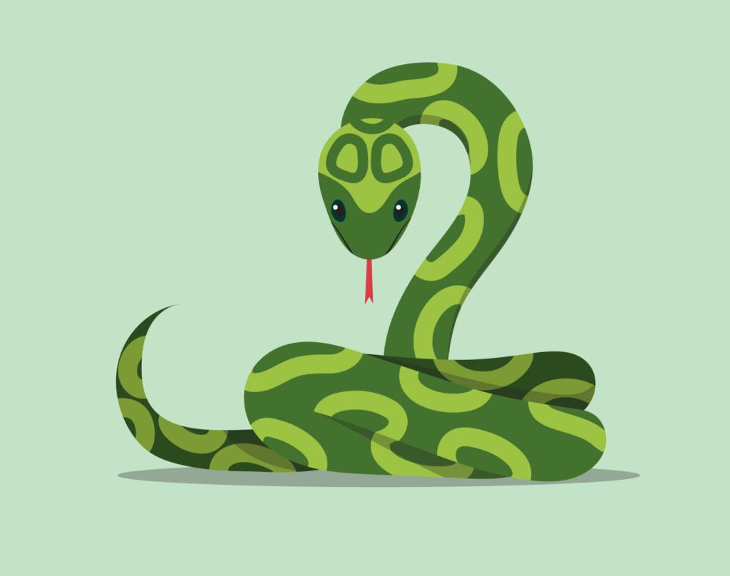 Snakes - King cobra