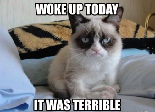 Grateful for Grumpy Cat this decade