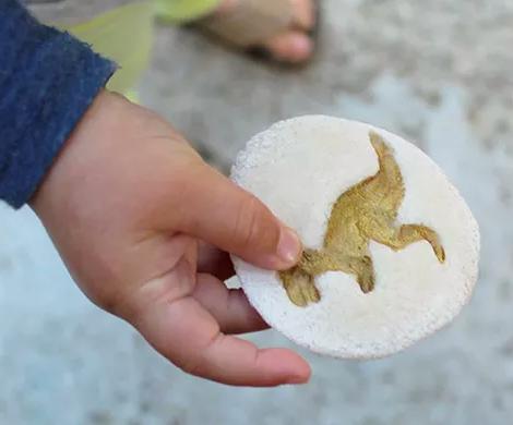 fossil dinosaur